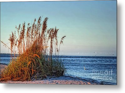Sea Grass View Metal Print by Gina Cormier