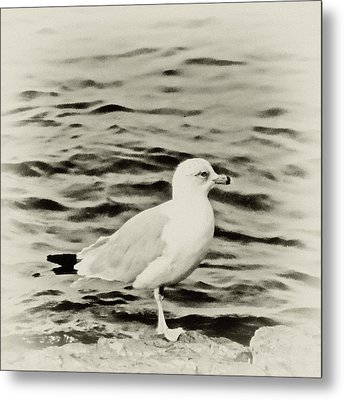 Sea Gull In Sepia Metal Print by Tony Grider
