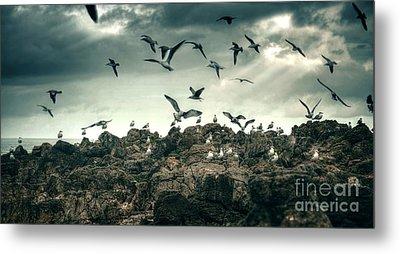 Sea Gulls Metal Print by Carlos Caetano