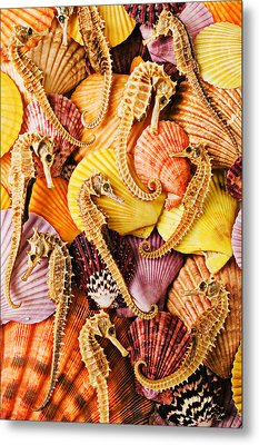 Sea Horses And Sea Shells Metal Print by Garry Gay