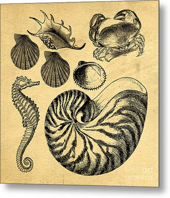 Metal Print featuring the drawing Sea Life Vintage Illustrations by Edward Fielding