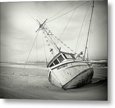 Sea Lion II - On The Beach Metal Print by HW Kateley