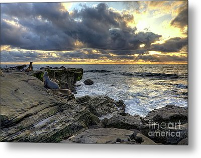 Metal Print featuring the photograph Sea Lions At Sunset by Eddie Yerkish