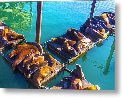Sea Lions On Harbor Docks Metal Print by Garry Gay