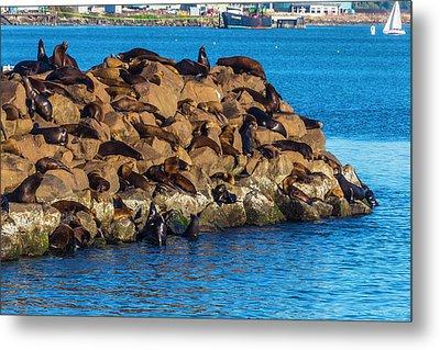 Sea Lions Sunning On Rocks Metal Print by Garry Gay