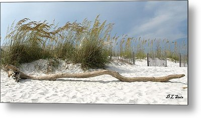 Sea Oats And Driftwood Metal Print by Dennis Stein