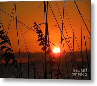 Metal Print featuring the photograph Sea Oats At Sunset by Terri Mills