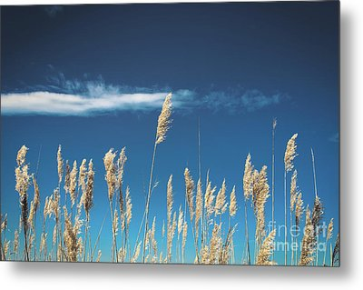 Metal Print featuring the photograph Sea Oats On A Blue Day by Colleen Kammerer