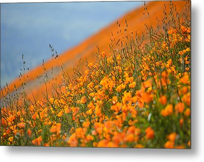 Sea Of Poppies Metal Print by Kyle Hanson