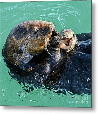 Metal Print featuring the photograph Sea Otter Munching On A Clam by Susan Wiedmann
