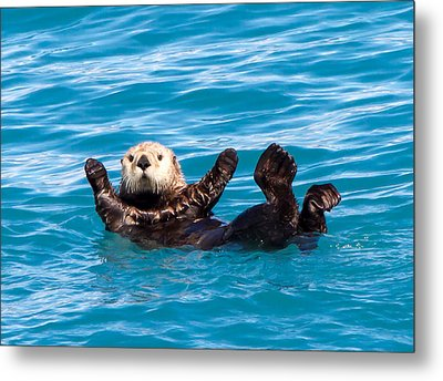 Metal Print featuring the photograph Sea Otter by Phil Stone
