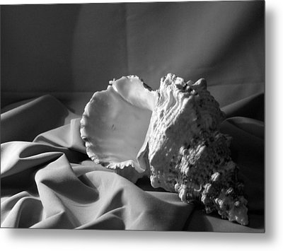 Sea Shell From The Beach 2 Metal Print by Keri Renee