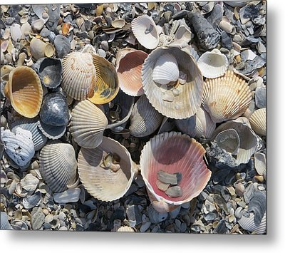 Sea Shell Mozaic Metal Print