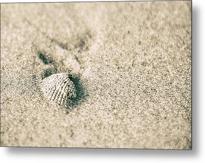 Metal Print featuring the photograph Sea Shell On Beach  by John McGraw