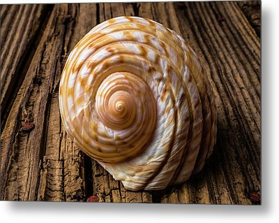 Sea Shell Study In Brown Tones Metal Print by Garry Gay
