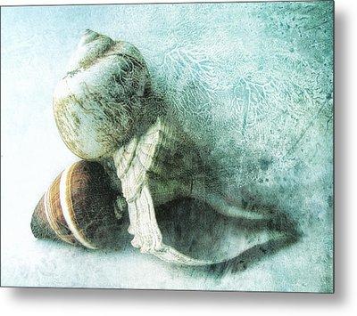 Sea Shells IIi Teal Blue Metal Print by Ann Powell