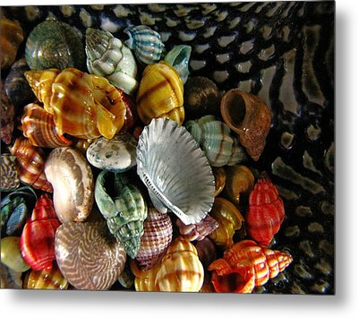 Metal Print featuring the photograph Sea Shells by Lori Miller