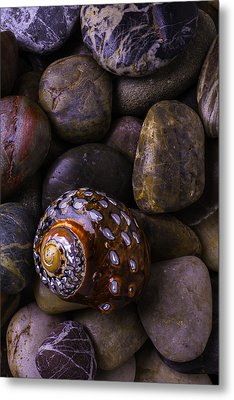 Sea Snail Shell On Rocks Metal Print by Garry Gay