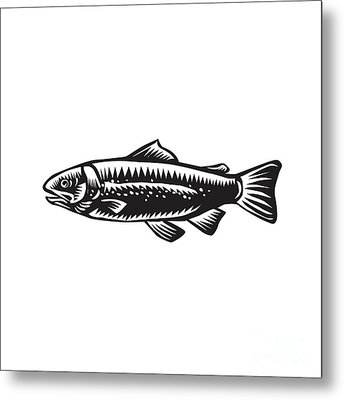 Sea Trout Spotted Metal Print