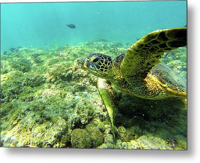 Metal Print featuring the photograph Sea Turtle #2 by Anthony Jones