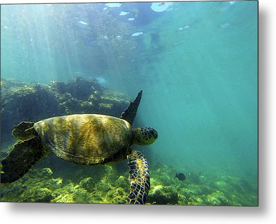 Metal Print featuring the photograph Sea Turtle #5 by Anthony Jones