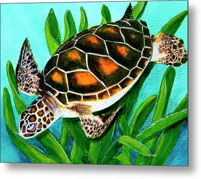 Sea Turtle Honu #352 Metal Print by Donald k Hall