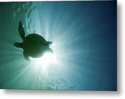 Sea Turtle Metal Print by M.M. Sweet