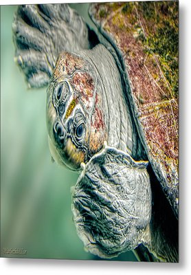 Sea Turtle Nature Wear Metal Print by LeeAnn McLaneGoetz McLaneGoetzStudioLLCcom