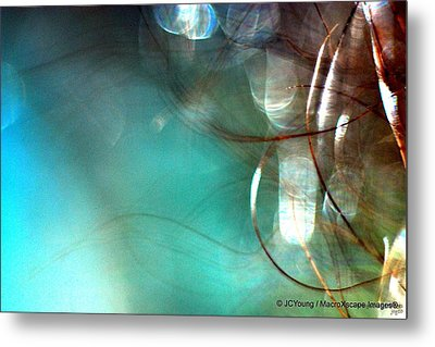 Sea World Metal Print by JCYoung MacroXscape