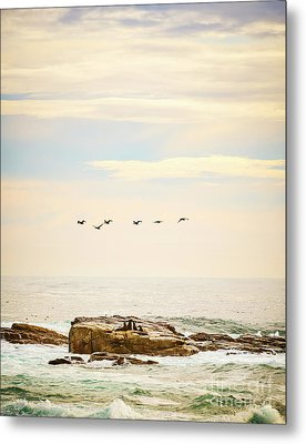 Seabirds And Seals Metal Print by Tim Hester