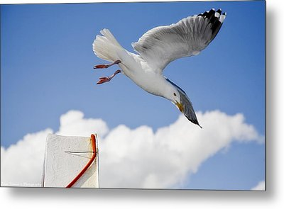 Seagull  Above Ferryboat Metal Print by Isaac Silman