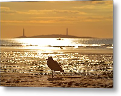 Seagull Admiring Thacher Island Gloucester Ma Good Harbor Beach Metal Print