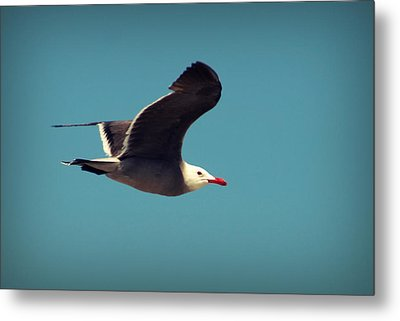 Seagull Aflight Metal Print