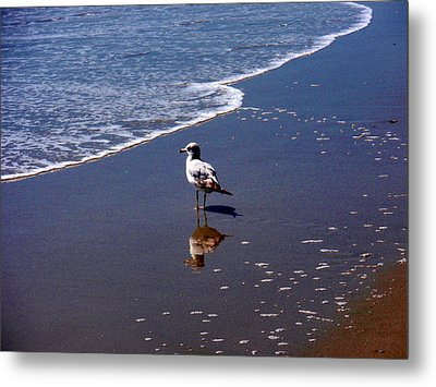Metal Print featuring the photograph Seagull At Myrtle Beach  by Beth Akerman