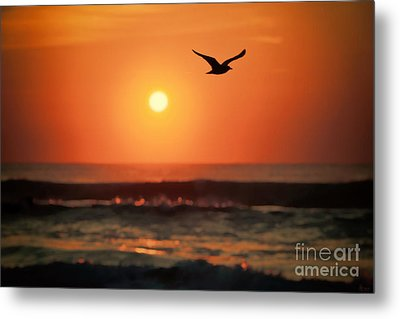 Seagull At Sunrise Metal Print