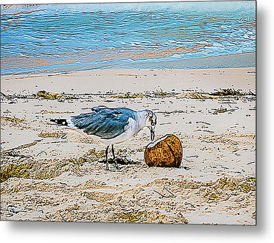 Seagull Eating From A Coconut On The Beach Metal Print by Rick Grossman