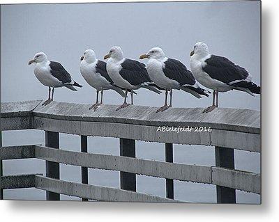 Seagull Friends Metal Print
