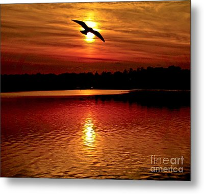Seagull Homeward Bound Metal Print by Carol F Austin