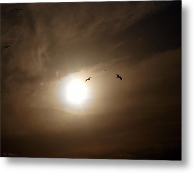 Metal Print featuring the photograph Seagull  In The Light Tunnel  by Arik Baltinester