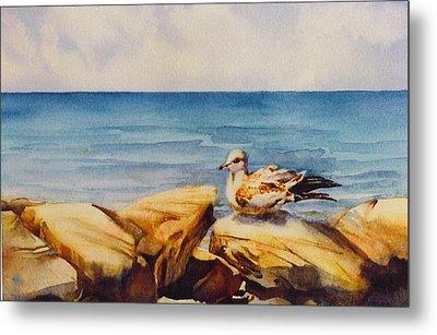 Seagull-on-the-rocks Metal Print by Nancy Newman