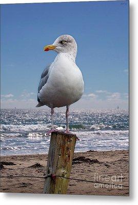 Seagull On The Shoreline Metal Print