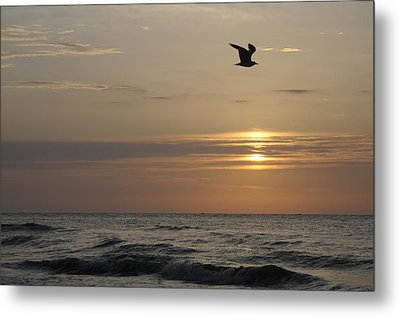Seagull Over Atlantic Ocean At Sunrise Metal Print by Darrell Young