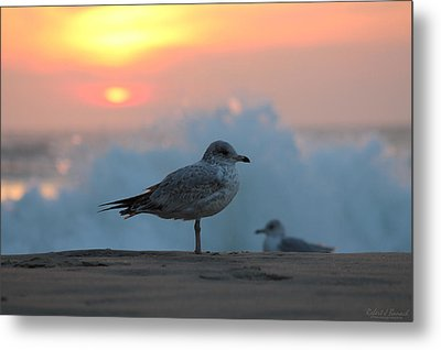 Seagull Seascape Sunrise Metal Print