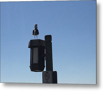 Seagull Sentry Metal Print by Russell Keating