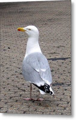 Metal Print featuring the photograph Seagull by Suhas Tavkar