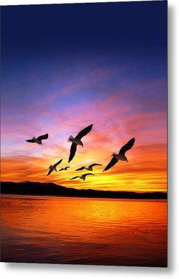 Seagull Sunset   Metal Print by Gravityx Designs