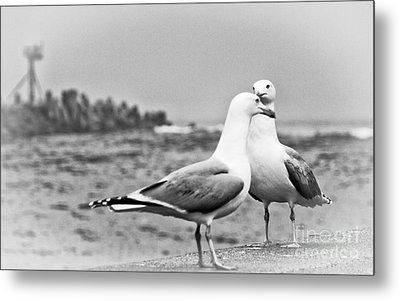 Seagulls In Love Beach Ocean Black White Print Photography Seascape Seagull Metal Print