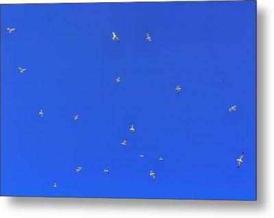 Seagulls In The Blue Sky Metal Print