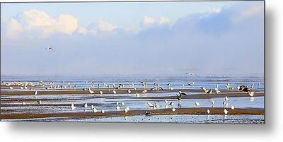 Seagulls On A Beach Metal Print by Svetlana Sewell