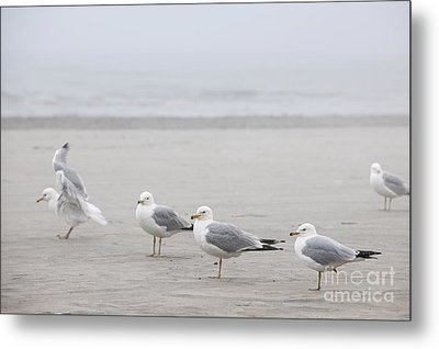 Seagulls On Foggy Beach Metal Print